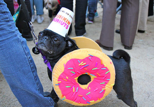 16 Adorable Pets Who Dressed Up As Food For Halloween