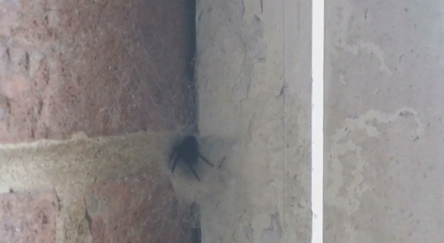This Family Have Had A Pretty Massive Spider In Their House For Five Years