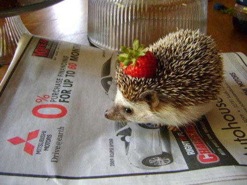 10 Reasons Why Hedgehogs Make The Best Pets