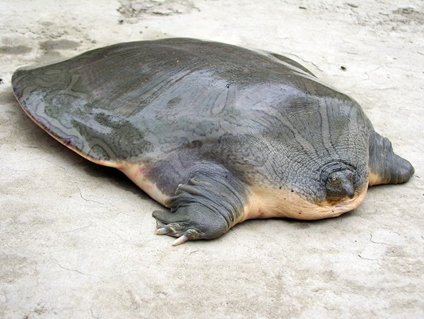 26 Animals You Won't Believe Actually Exist