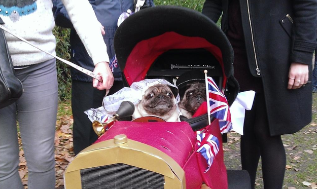 Some MPs Had A Dog Show And It Was Utterly Ridiculous