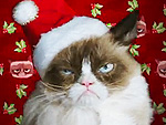 Twitter Reacts to Grumpy Cat's Worst Christmas Ever