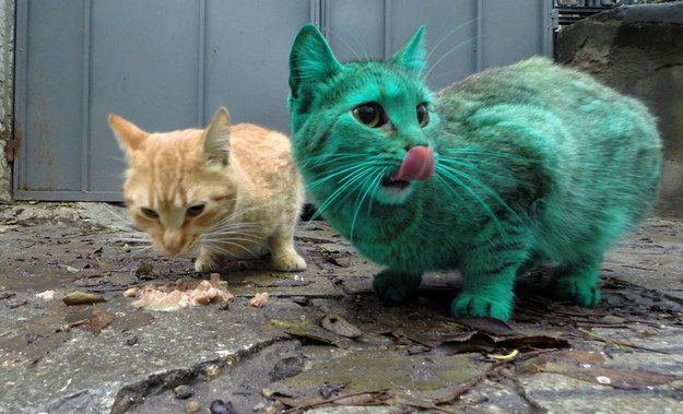 This Cat Accidentally Turned Himself Turquoise And It's Actually Really Pretty