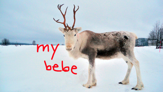 The Best And Worst Reindeer Officially Ranked By Santa
